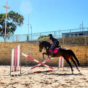 Agistment at Showgrounds Equestrian Centre